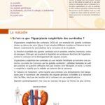 thumbnail of Hyperplasie-Congenitale-Surrenales-orphanet-pour-les-patients